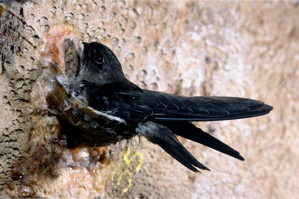 Niah National Park - Bird